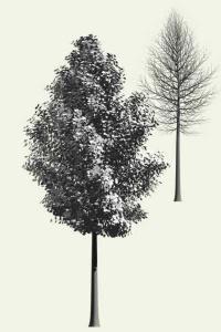 Árbol generado con Arbaro 1